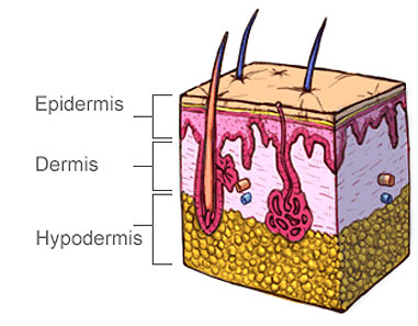 Skin cell illustration
